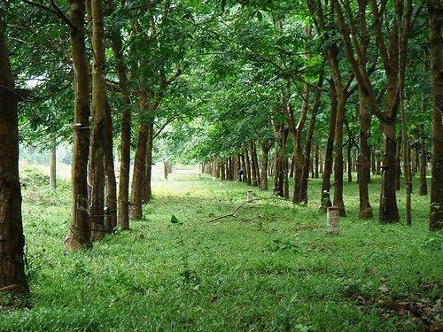 thủ tục xin giấy phép xây dựng tạm trên đất trồng cây lâu năm