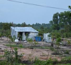thủ tục xin giấy phép xây dựng nhà tạm trên đất trồng cây lâu năm