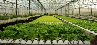 Giấy phép xây dựng nhà kính làm nông nghiệp sạch